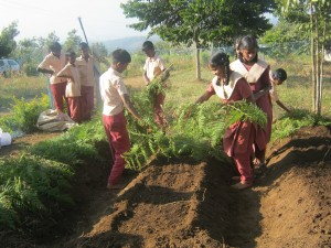 School students from class 7 and 8 putting shady leaves on the seeds to cover from sunlight